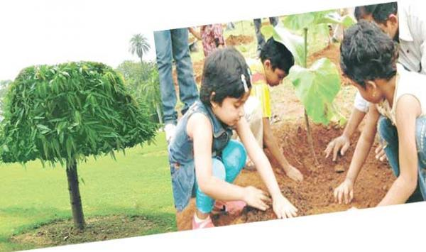 The Benefits Of Planting Trees